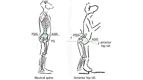hip flexors photos